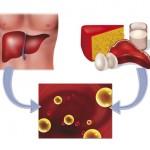 """HDL & LDL Cholesterin: Was steckt hinter """"guten"""" und """"bösen"""" Cholesterinwerten?"""