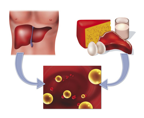 Cholesterin in Leber und Lebensmitteln