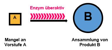 Stoffwechsel Enzym hyperaktiv