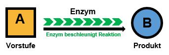Stoffwechsel Enzym