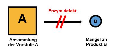 Stoffwechsel Enzymdefekt