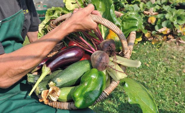 Selbst geerntetes Gemüse