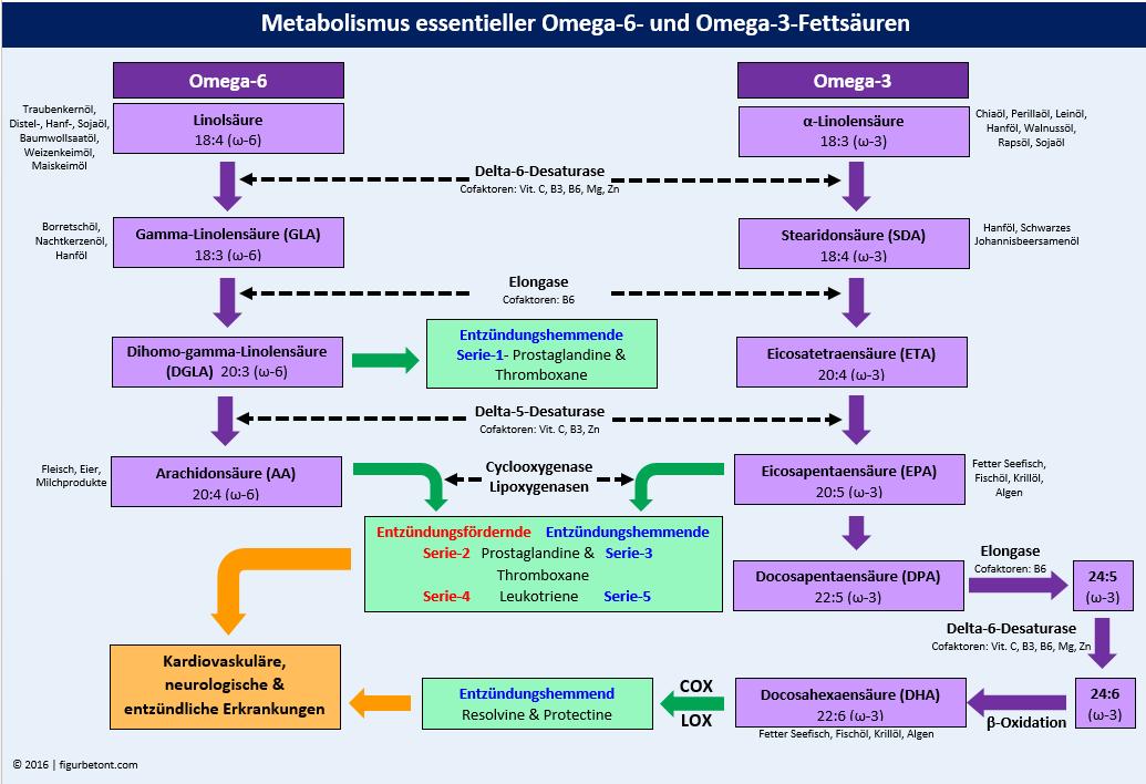 Metabolismus essentieller Fettsäuren